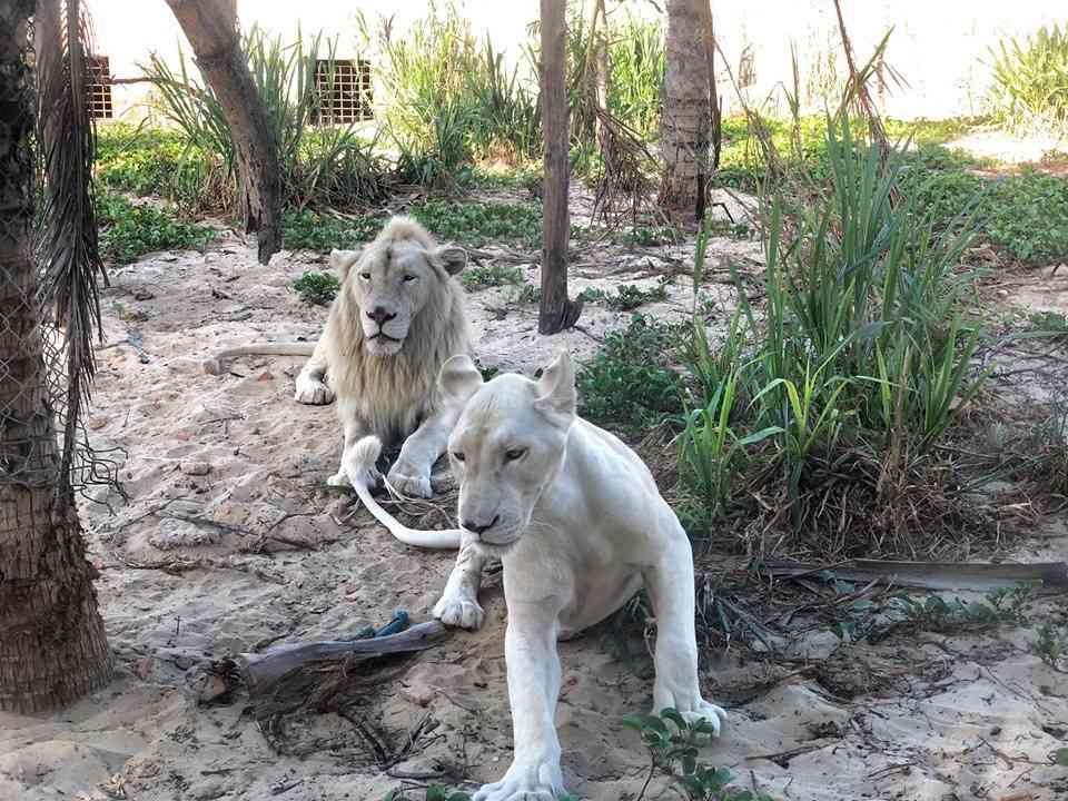 FLC Zoo Safari Quy Nhon